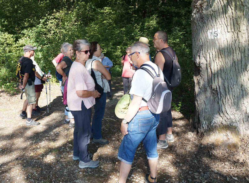 Cette fois, marche dans la forêt régionale de Rosny qui est située au nord-ouest du département des Yvelines essentiellement sur la commune de Rosny-sur-Seine ainsi que les communes de Perdreauville, Bréval, Jouy-Mauvoisin, Rolleboise. Cet espace de 1 221 hectares, dont 1 152 de forêt est depuis 1989 et 1992 la propriété de l'Agence des espaces verts de la région Île-de-France.
