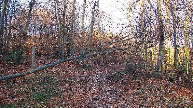 le GR12 dans la forêt de Compiègne