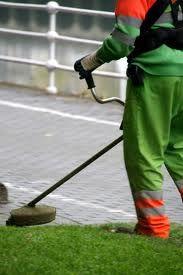A chi richiedere la pulizia del giardino a Torino