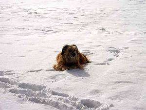 Cet hiver, Mowgli découvre la neige !