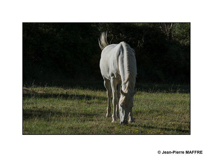 C'est un très grand plaisir de voir tous ces chevaux galoper en toute liberté.