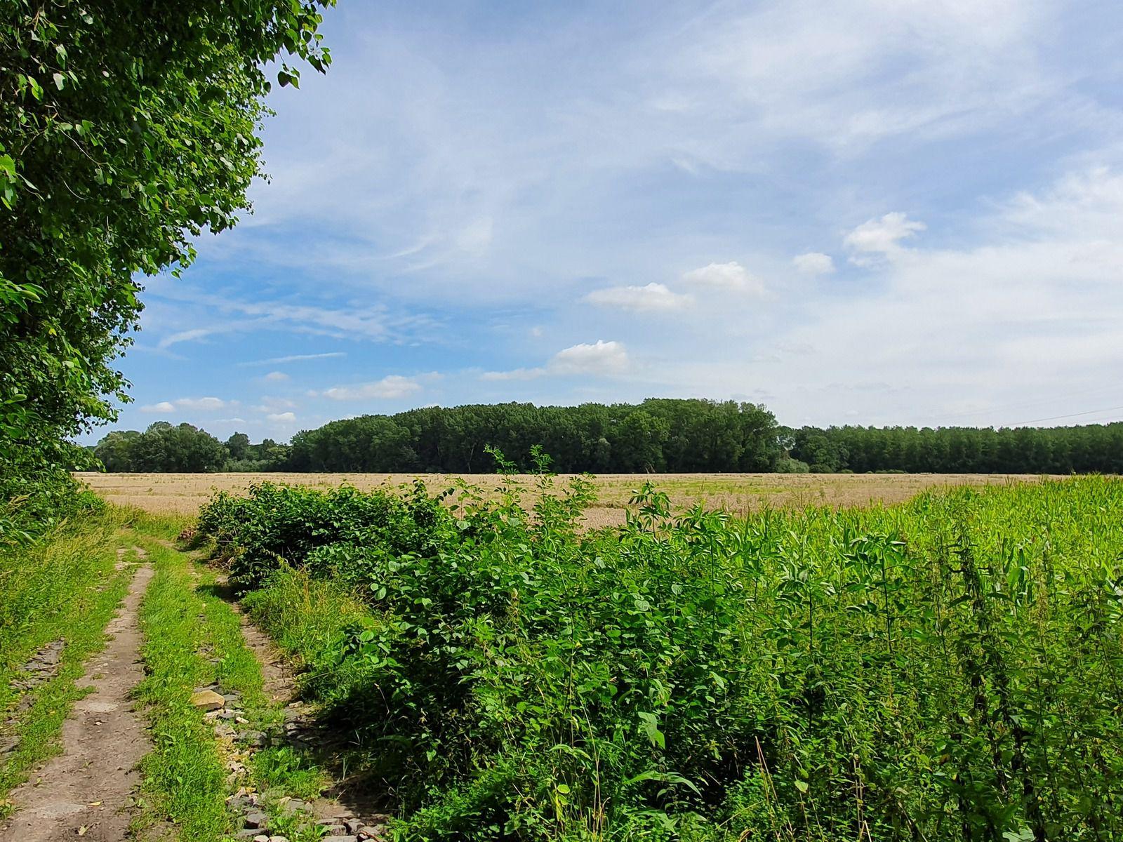 Marais d'Annœullin, à Bauvin et Sainghin en Weppes