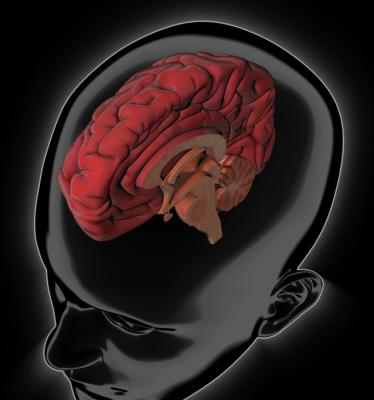 Animations 3D les effets des substances psychoactives sur le cerveau