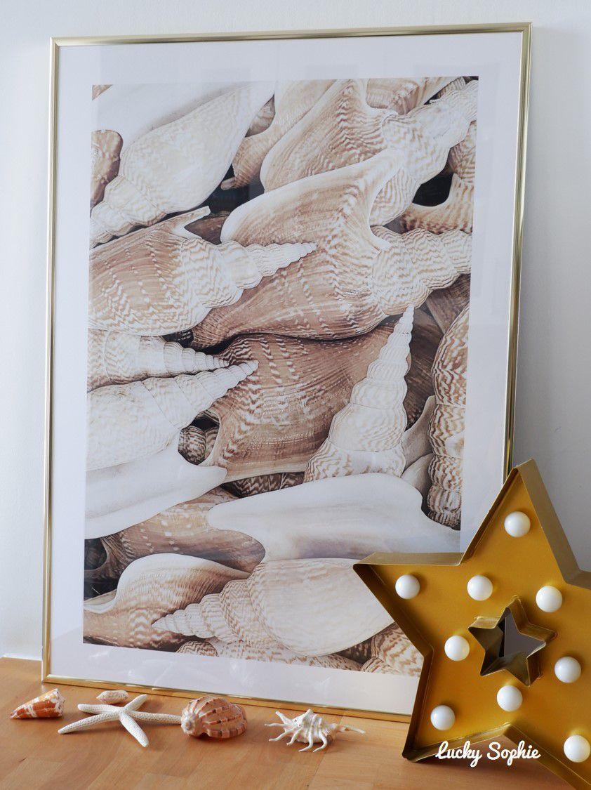 Mon cadre coup de coeur qui me rappelle les journées à la plage à découvrir de jolis coquillages !