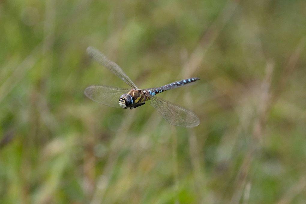 Regardez la position des ailes.