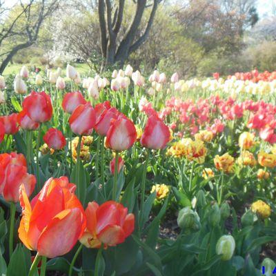 New York Insolite: Brooklyn Botanic Garden