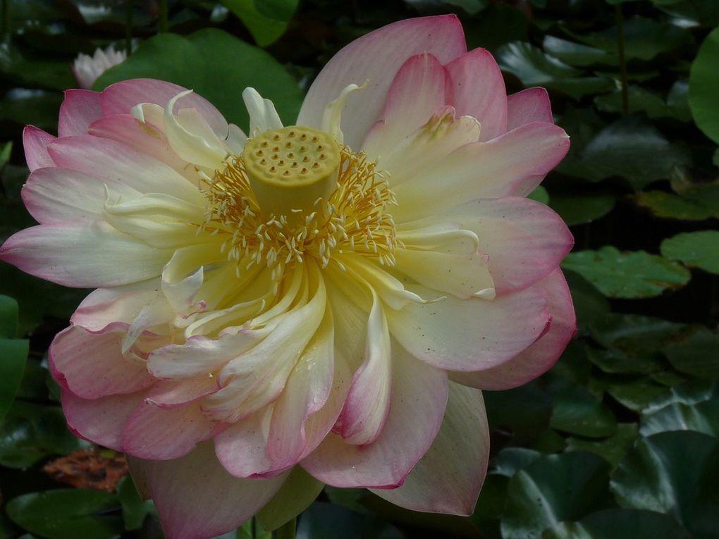 Fleurs 112