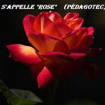 Elle s'appelle Rose