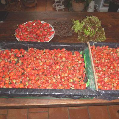 Des fraises, des fraises, des fraises......