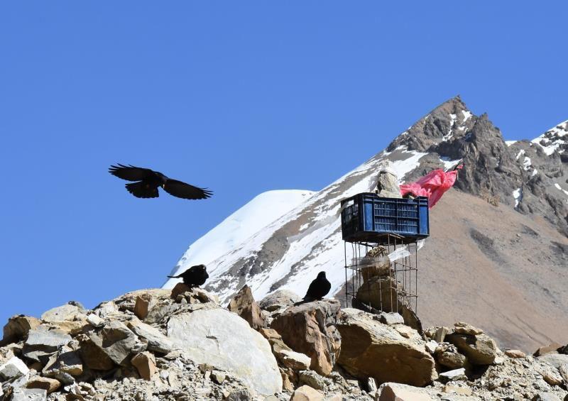 Swiss camp, glacier de Chhonbarban, chocards au Japanese camp