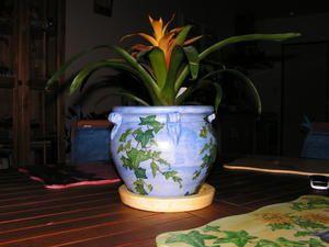 Album - pots-de-fleurs