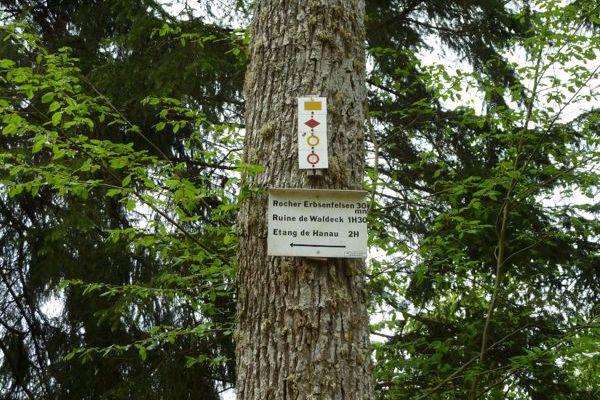 Randonnée dans les Vosges du Nord. 8 km - 11/...