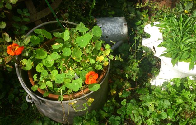 Les Jardiniers Complices et les sauvageonnes du jardin
