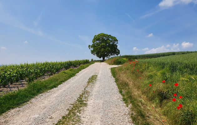 09 juin 2021 - La Via Francigena de La Chaussée-sur-Marne à Vitry-le-François