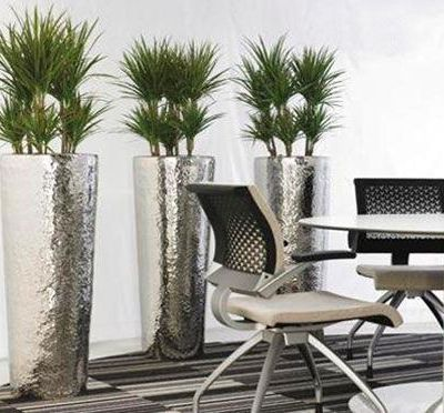 The Hiring Reasons and Facilities of the Indoor Plants like Ficus Lyrata Melbourne