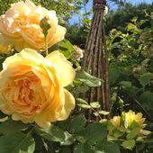 Jardinage à Frescati - Les Roses -  Jardins merveilleux