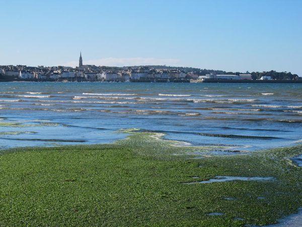 Plage du Ris : tapis vert