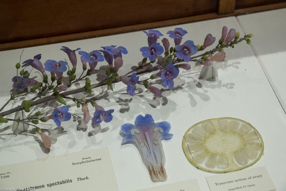 Photographies de la salle d'exposition des modèles de plantes et de quelques planches.