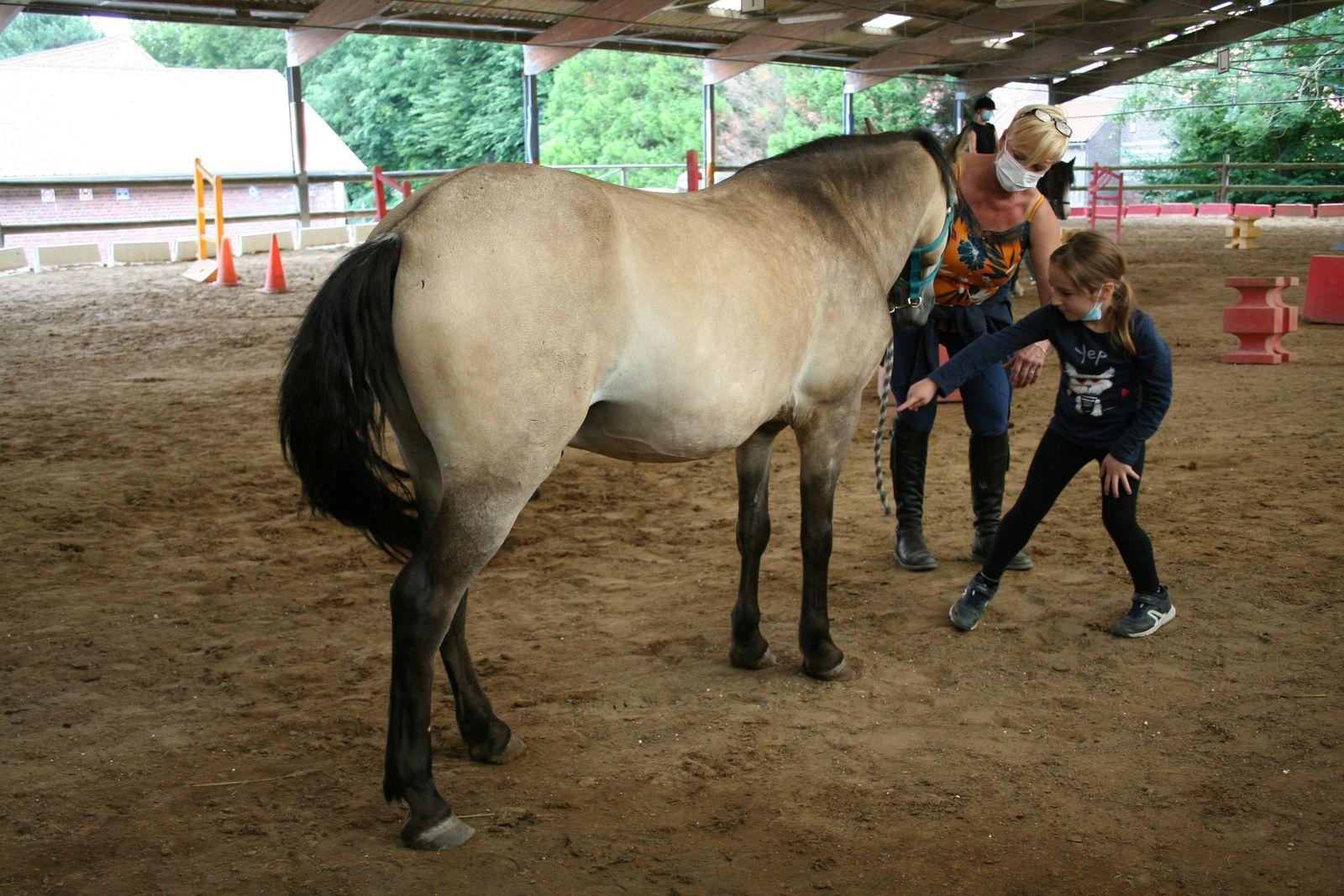 Stage Equitation-5/6 ans et 7/8 ans-Du 02 au 06 août 2021