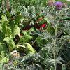 Comment associer les légumes au potager ?