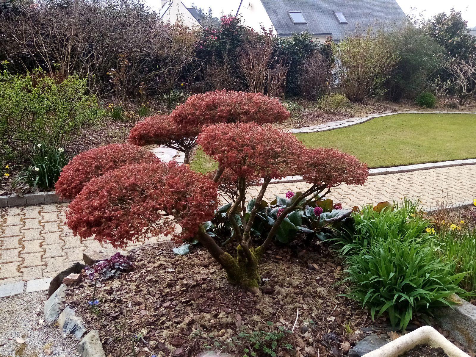 Le jardin de mes parents (mars 2021)