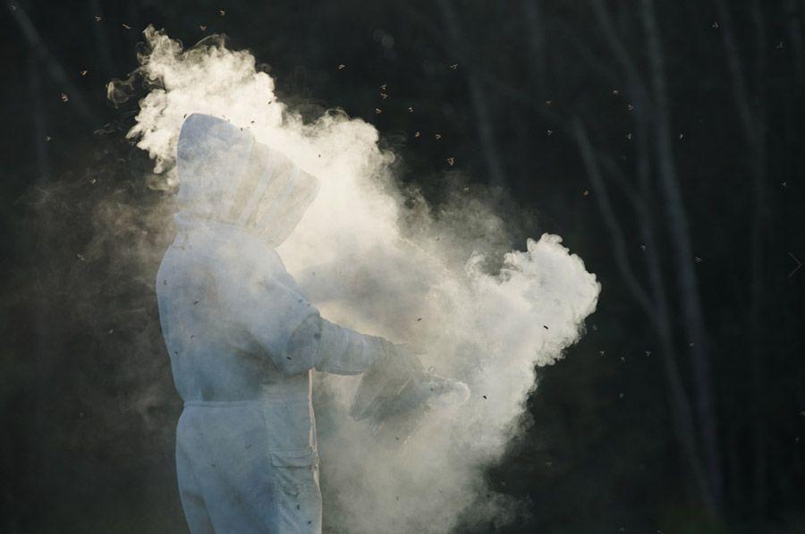 « L'attaque des frelons géants », documentaire inédit ce soir sur Discovery Channel