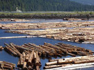 Flottage du bois ou en canadien ... la drave