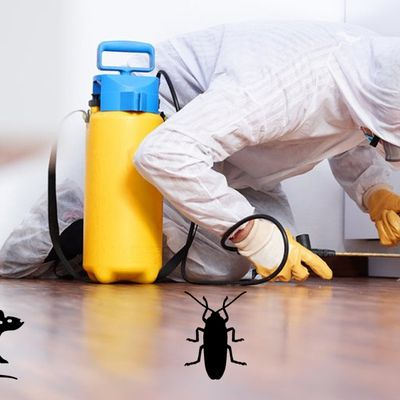 How Common Home Pests Destroy Personal Hygiene And Well-being?