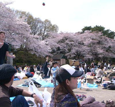 Hanami à Tamagawa