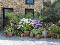 de belles scènes de jardin, des végétaux rares, évasion et ambiance sereine...