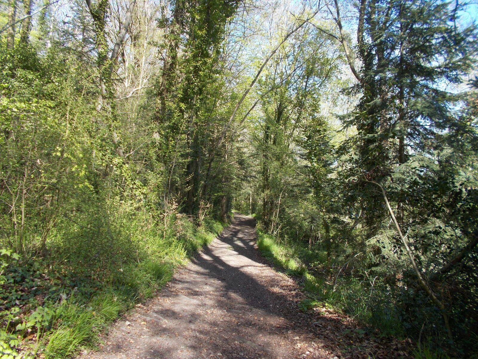 Randonnée sur le chemin du gibet (27500 Saint-Germain-Village)