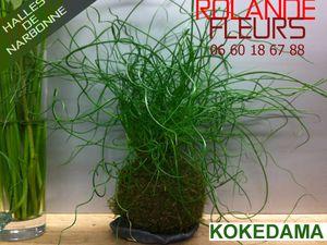 kokedama ou 苔玉 Rolande fleuriste aux halles de Narbonne vous propose des kokedama créés méthode japonaise et faits maison idée cadeau tendance et trés originale