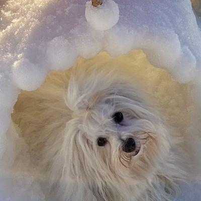 Leapfrog à la neige