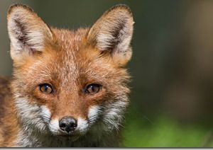 Photos extraites du livre « La biodiversité s'invite chez moi » ©Pascal Gérold (Cliquez pour agrandir)