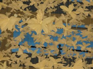 Des papillons