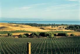 La vigne dans la Région de Hawkes Bay
