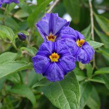 Petites fleurs sur la presqu'île du Cap-Ferret...