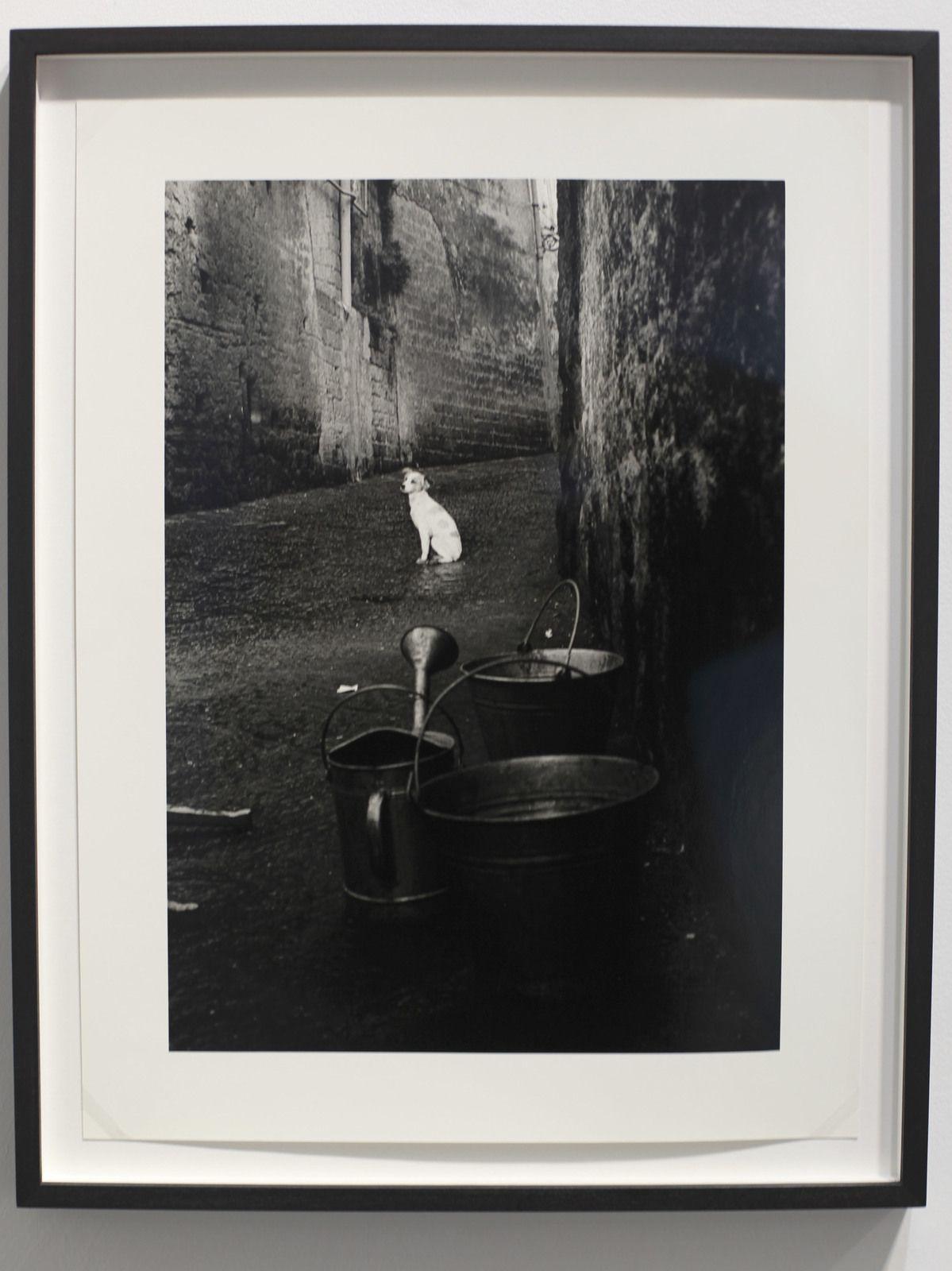 """Alley Dog, Naples, Italy"", 1961 de Herbert LIST - Courtesy de la galerie Galerie Karsten Greve Paris © Phorto Éric Simon"