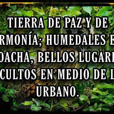 TIERRA DE PAZ Y DE ARMONÍA; HUMEDALES EN SOACHA, BELLOS LUGARES OCULTOS EN MEDIO DE LO URBANO.