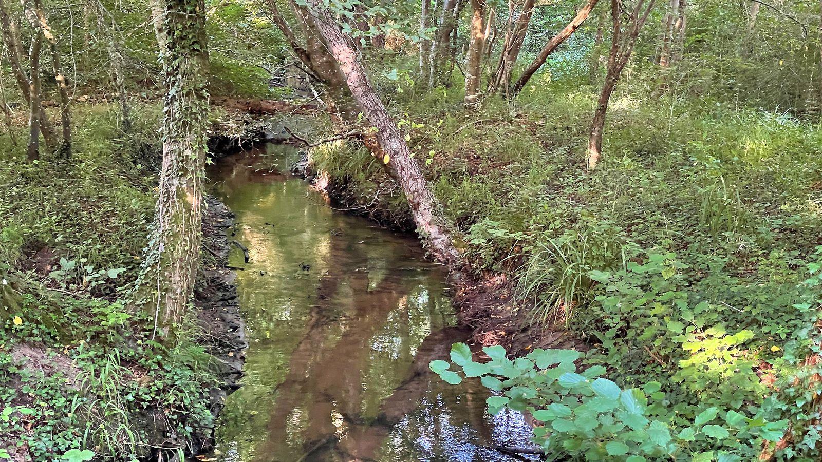 en forêt de Compiègne, des étangs et des Rus