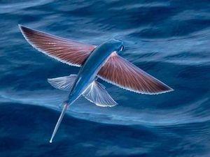 « Monde sans oiseaux » de Karin Serres