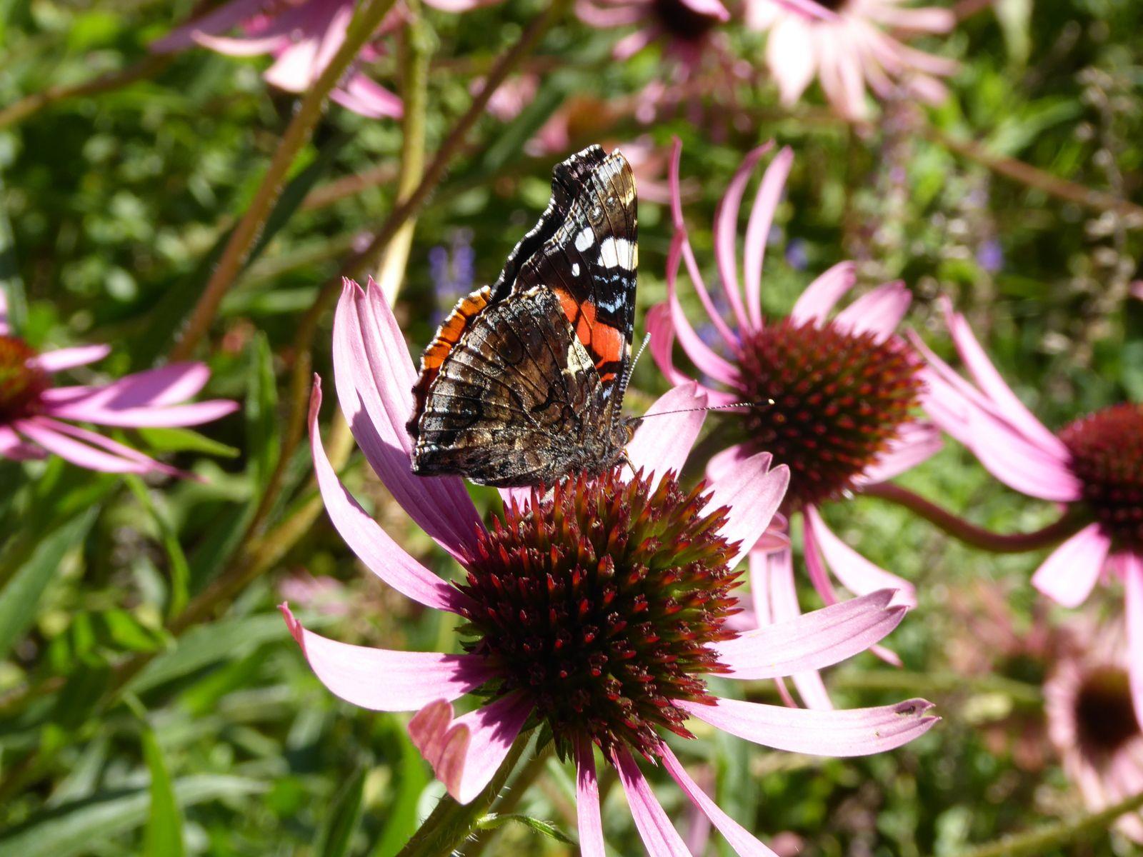 Inspiration et papillon