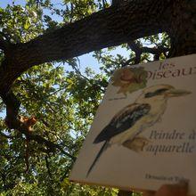 Le livre les oiseaux peindre à l'aquarelle
