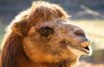 Une pétition pour interdire les cirques avec animaux à Toulouse