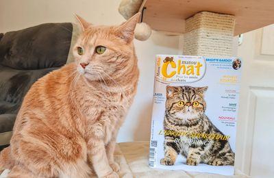 Magazine Matou Chat : lecture des vacances de la Toussaint