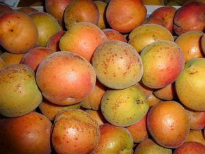 Les abricots du jardin