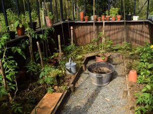 Poivrons en attente de plantation, aubergine, vue générale et semis à repiquer.