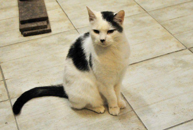 Il est adopté !!! : TRAVIS