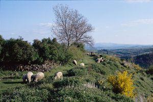 Rando en Auvergne : la traversée des puys sur les GR 441 et 30