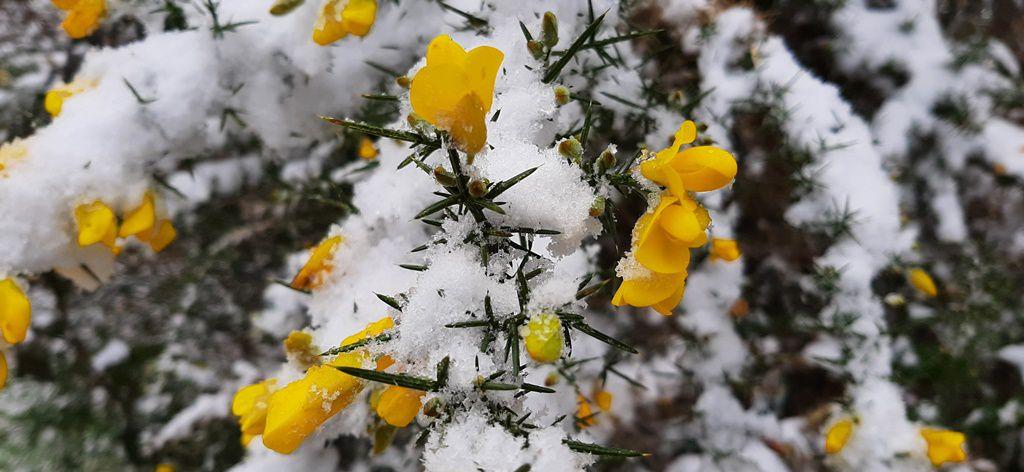 Première neige de l'hiver